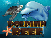 Dolphin Reef